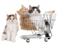子猫がショッピングカートに入っている様子