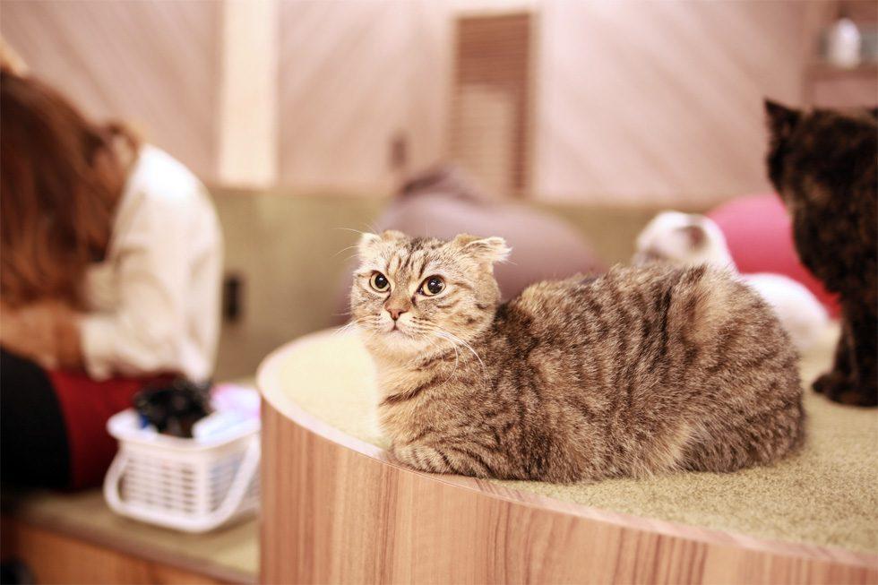 猫カフェで猫がこちらをうかがっている様子