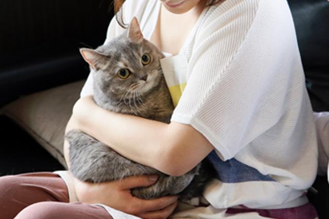 猫を抱っこしている様子