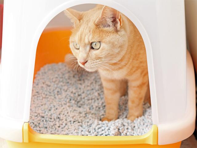 猫用トイレの中に猫がいる