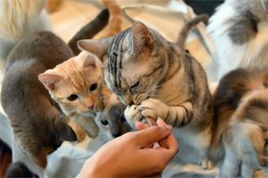 おやつに猫が群がる様子