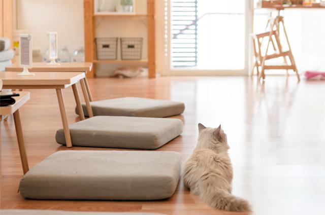 猫カフェの雰囲気
