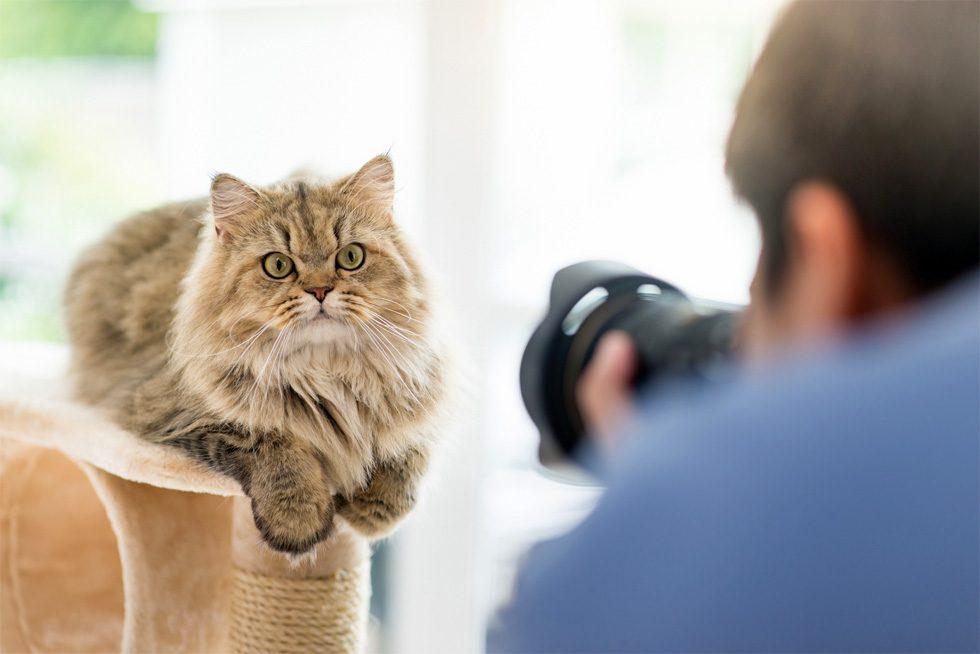 男性がカメラをもって長毛種の猫を撮影している様子