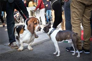 街を散歩中の犬同士が恐る恐る匂いを嗅ぎ合っている様子