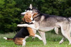 2匹の犬が取っ組み合いのけんかをしている様子