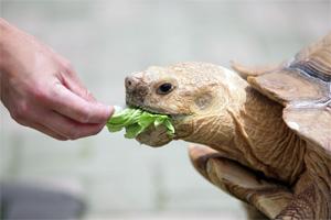 手から野菜をもらっているカメの様子