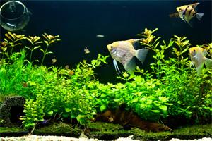 魚と水草のアクアリウムの様子