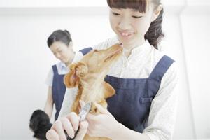 ペットショップ店員が犬の世話をする様子
